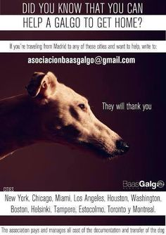 Help galgos  podencos to fly and find their home.
