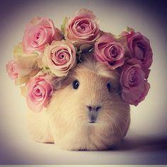 BooBooandfriends: BooBoo ist ein Meerschweinchen, und ein Instagram Star! Wir finden ihn gut und lassen uns von den herrlich beknackten Bildern aufmuntern.