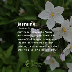 How to Use Flower EssencesYou can find Jasmine and more on our website.How to Use Flower Essences Jasmine Plant, Jasmine Jasmine, Mulch Around Trees, Lawn Soil, Planting Marigolds, Witch Herbs, Flower Meanings, Moon Garden, Language Of Flowers