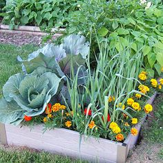 When to Plant Vegetables... At a soil temperature of 40 degrees F, plant arugula, kale, lettuces, radicchio, radishes, and spinach.  At a soil temperature of 50 degrees F, plant Chinese cabbage, onions.  At a soil temperature of 60 degrees F, plant beets, broccoli, cabbage, carrots.  Other cool-season vegetables include asparagus, celery, collards, garlic, kohlrabi, potatoes, rhubarb, and rutabagas.