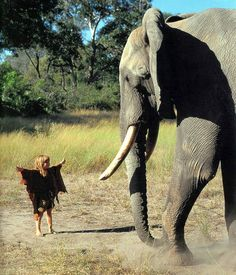 Tippi Degré – the little wild child of Africa
