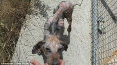 Starving: This emaciated dog has been rescued by Theoklitos Proestakis and brought to his shelter in Crete Animal Rescue Stories, Crete, Animals Beautiful, Abandoned, Moose Art, Horses, Photo And Video, Dogs, Shelter