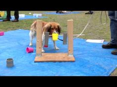 Hersenwerk voor honden - YouTube Dog Enrichment, Enrichment Activities, Brain Games For Dogs, Dog Games, Pet Dogs, Dog Cat, Pets, Whelping Puppies, Dog Puzzles