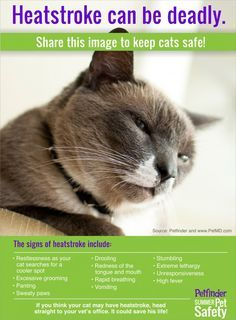 Heatstroke can be deadly. Learn the signs of heatstroke in cats and share this image to keep cats safe! --This is why my former neighbor's cat is now mine; I saved him from heatstroke. Crazy Cat Lady, Crazy Cats, Gatos Cats, Cat Health, Health Care, Health Tips, Pet Care, Cats And Kittens, Kitty Cats