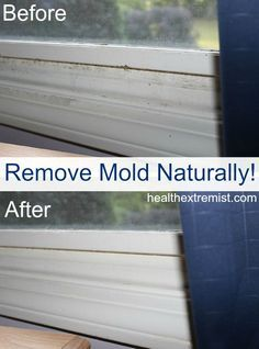 1000 images about pictures of mold on pinterest - How to get rid of surface mold in bathroom ...