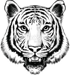 Vector Art : Portrait of a tiger