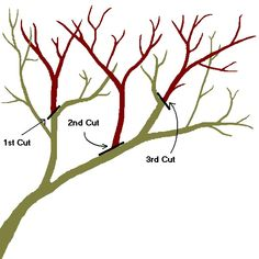 How to Prune Your Fruit & Nut Trees – Living Off Grid Guide Pruning Plants, Bonsai Pruning, Bonsai Plants, Espalier Fruit Trees, Trees And Shrubs, Fruit Garden, Garden Trees, Prune Fruit, Bonsai Tree Care