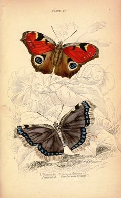 butterfly print vintage - Cerca con Google