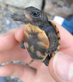Most adorable baby turtles!!!