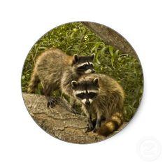 Raccoons Stickers #gift #zazzle #Christmas #photogift