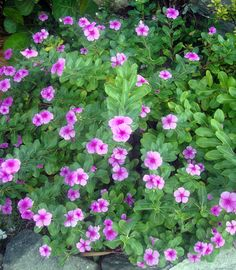 Nice flowers in Antigua's garden.