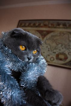 It's New Year time!))