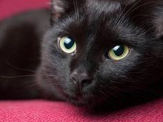 Phat nero ragazza micio