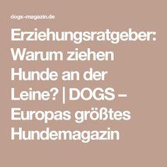 Erziehungsratgeber: Warum ziehen Hunde an der Leine? | DOGS – Europas größtes Hundemagazin