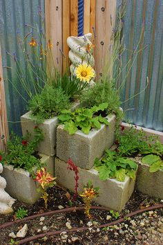 Cinder block planters - almost threw away some cinder blocks! Now I have a place to plant my strawberries!