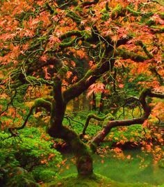 """""""The Japanese gardens in Portland, Ore., are a beautiful place to be."""" (Courtesy MFDonovan/myBudgetTravel) From: 38 Gorgeous Gardens in Bloom."""