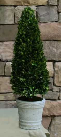 "Preserved Boxwood Topiary Cone - 30""  #homedecor"
