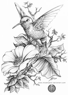 Flower Drawing Hummingbird 蜂鸟 done for a book cover size, HB, - Bird Drawings, Animal Drawings, Tattoo Drawings, Drawing Sketches, Flower Drawings, Drawing Flowers, Flower Sketches, Botanical Drawings, Painting Flowers