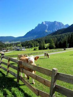 Zugspitze in summer #bavaria #nature