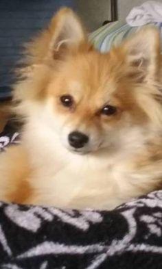LOST DOG: 08/10/2017 - Tumtum, Washington, WA, United States. Ref#: L35615 - #CritterAlert #LostPet #LostDog #MissingDog