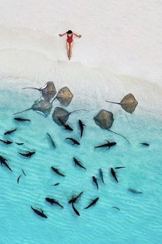 The Maldives is simply heaven on earth. Double tap if you are agree ✨😍😍😍✨ . Pictures by ✨✨ for a feature ❤️ Destinations, Maldives Travel, Dream Photography, Greece Holiday, Destination Voyage, Ocean Creatures, Ocean Beach, Wanderlust Travel, Beach Trip