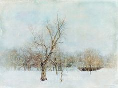 Minimalist Winter Landscape Snow and Bare by PaintedTulipStudio