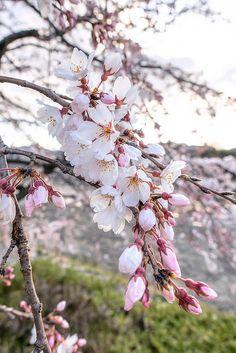 Цветущие Деревья, Цветы, Икебана, Красивые Цветы, Сады, Ромашки, Озеленение, Фотографии Цветов, Ежедневники