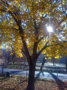 Archer Park, Prestonsburg, KY