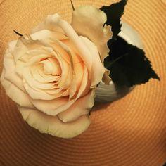 Ruusuinen päivä tänään  Olen saanut tehdä töitä oppia innostua ja oivaltaa yhdessä aivan mahtavien ja osaavien ihmisten kanssa LähiVerkko-projektin aikana. Tämän projektin aika on päättymässä ja on alkanut eroamisten ja jäähyväisten aika. Mutta toivottavasti ei aivan lopullisten sellaisten. #ruusuja #ruusu #roses #rose #flower #flowers #töissä #atwork #mywork #lähiverkko #eläkeliitto #ehytry #projekti