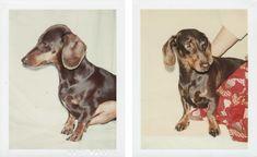 Andy Warhol, Maurice the Dog Hot Dog Weiner, Mediums Of Art, Dachshund Art, Vintage Dog, Andy Warhol, Doge, Mans Best Friend, Historical Photos, Hot Dogs