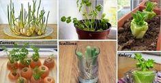 6 legumes que você só precisa comprar uma única vez e eles se reproduzem para sempre - veja como!   Cura pela Natureza