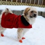 winter dog in clothing