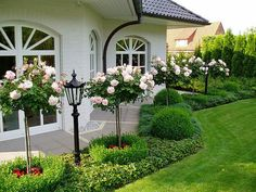 Rose topiaries, boxwood and stunning!