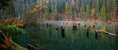 """""""Lacul Rosu  Lacul Rosu, sau Lacul Ucigas este un lac vrajit ale carui ape au culori nemaintalnite, rosiatice. La baza culorii vrajite a lacului stau Muntele Suhardul, munte ce are o culoare purpurie si se oglindeste falnic in lac, cioturile de brad care se vad pe fundul acestuia si de care te poti orcand izbi intr-o plimbare cu barca precum si traseul Paraului Rosu, traseu ce trece peste soluri de culoare rosiatica."""""""