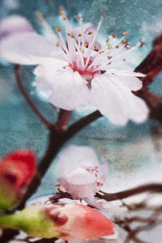 Floral Art Print on Canvas - Stampa d'Arte Floreale su Tela: Waiting for Spring