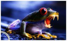2012 01 07 Froggr by Human_Descent, via Flickr