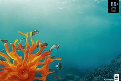 Earth Hour: coral