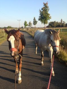 My horses Pepper and Salt and me are going for and exercise! My dogs are here too but they are WAY ahead of us lol!
