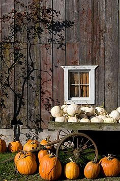 """I would rather sit on a pumpkin, and have it all to myself, than be crowded on a velvet cushion.""   ― Henry David Thoreau  [rustic barns and pumpkins]"