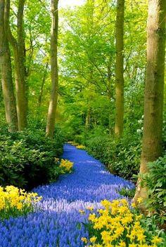 Blue Path, Kukenoff Gardens, Netherlands