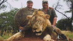 Kein Verfahren gegen Jäger von Löwen Cecil