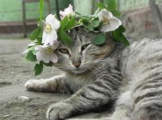 Cat with Flower Garland