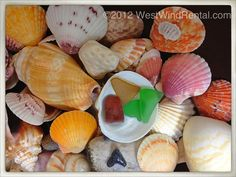 Casey Key Beach Treasures! Scallops, sea glass, coral and more...
