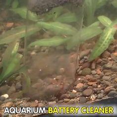 Self Cleaning Fish Tank, Aquarium Gravel, Fish Feed, Water Plants, Exotic Cars, Home Improvement, Plant Leaves, Luxury Cars, Home Improvements