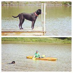 """Who's that in the kayak? Oh, it's my buddy Matt. I'm gonna go visit him!"" By Putney. #evasplaypupspa #pondtime #bffs #doggievacay #dogsinnature #dogdaysofsummer #dogsofinstagram #endlessmountains #mountpleasant #badassbk #adoptdontshop"
