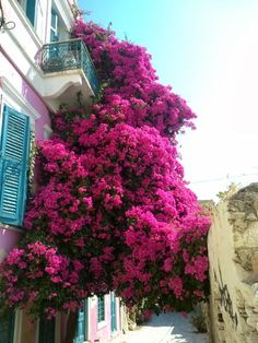 Bougainvillea. You wouldn't need to put any containers out with this growing from the balcony!