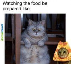 Cat memes I'm so hungry...