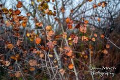 Nature Photography Fall Leaves Autumn Leaves by DawnMercerPhoto