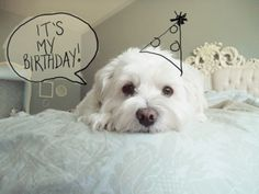 puppy birthday love...sooo doing this for my dogs birthday