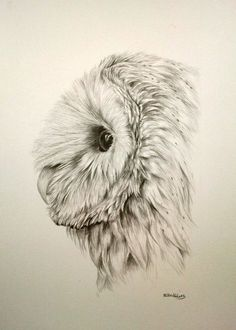 Barn owl pencil drawing 12x9""